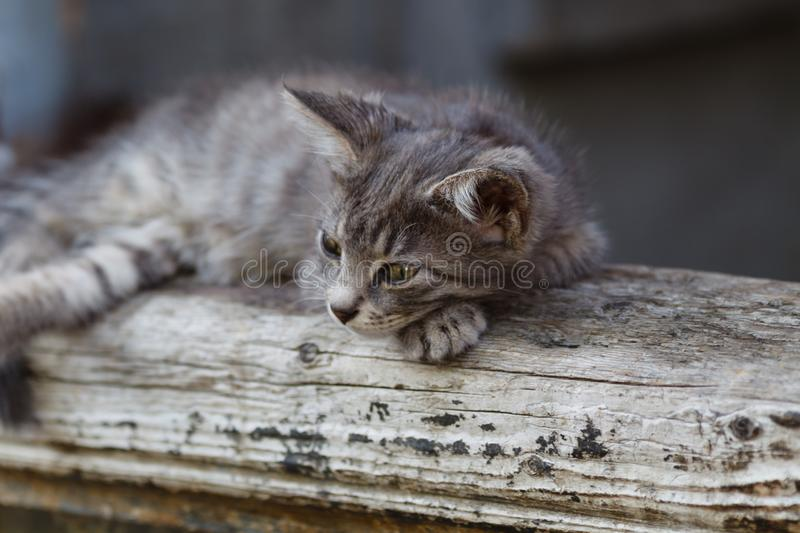 Gray cat close up view stock images