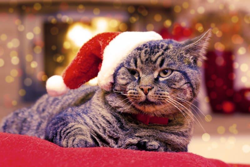 Gray Cat con el sombrero de Papá Noel imagen de archivo