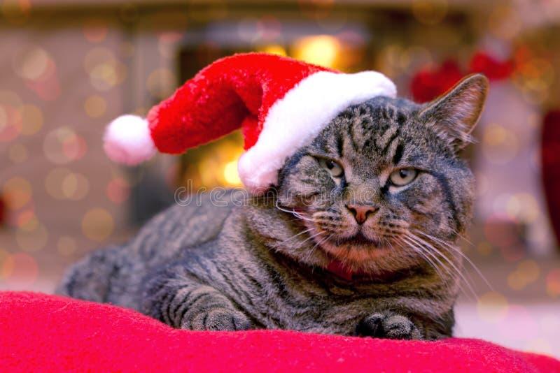 Gray Cat con el sombrero de Papá Noel fotografía de archivo