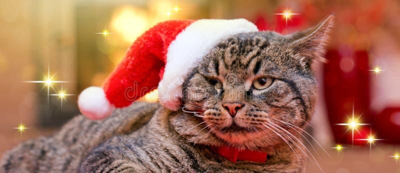 Gray Cat con el sombrero de Papá Noel y una chimenea fotos de archivo libres de regalías