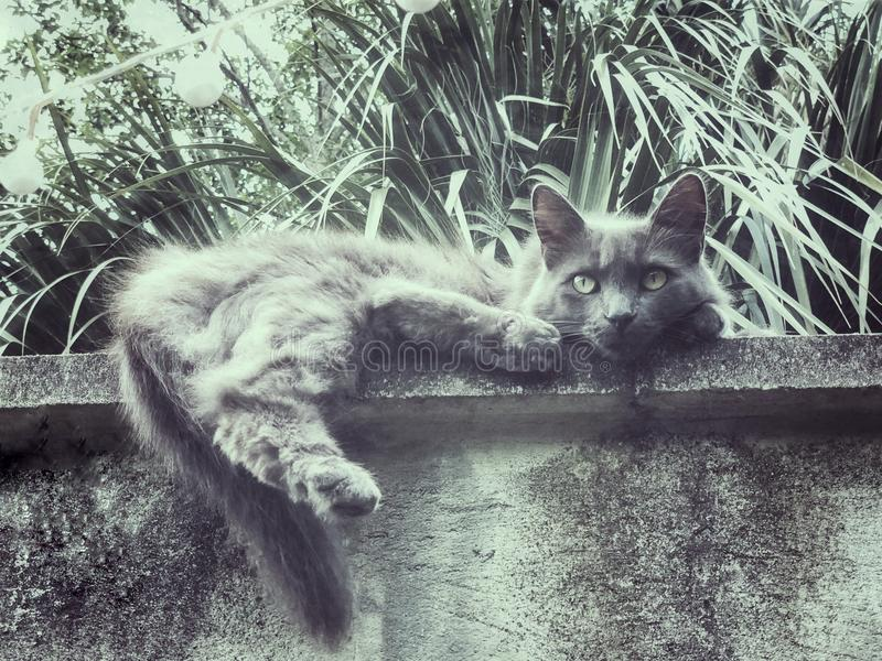Gray cat chills on the ledge stock photography