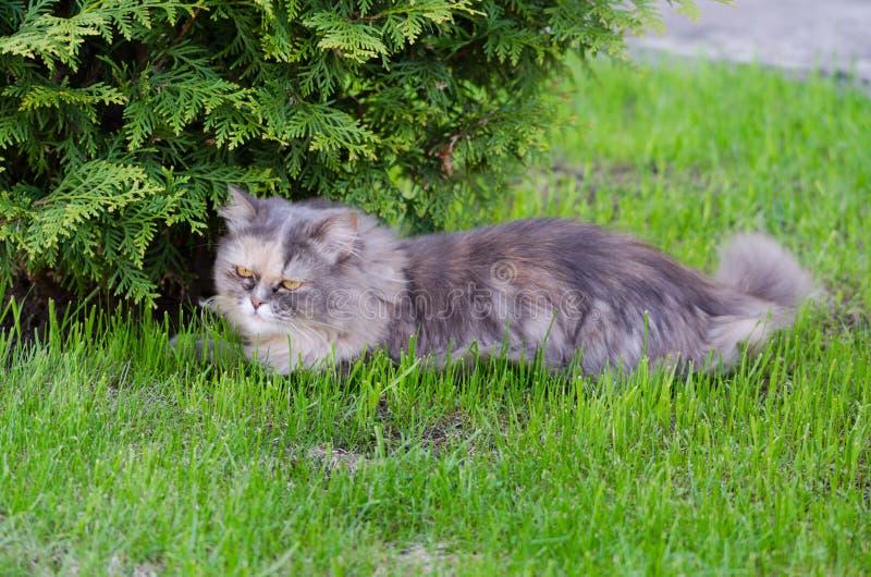 Gray cat on the grass stock photos