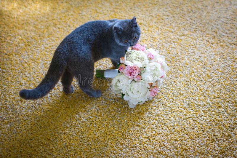 Gray cat groom with a bouquet stock image