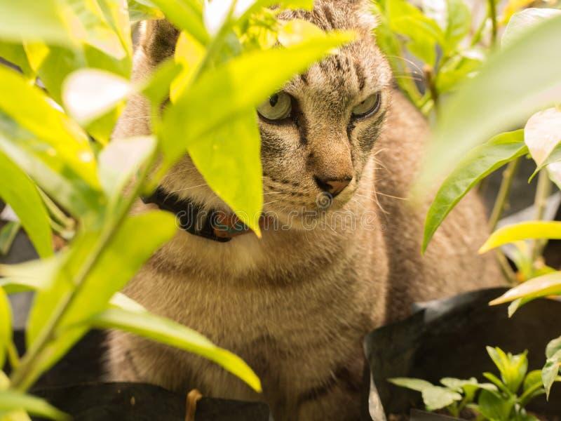 Gray Cat Hiding imágenes de archivo libres de regalías