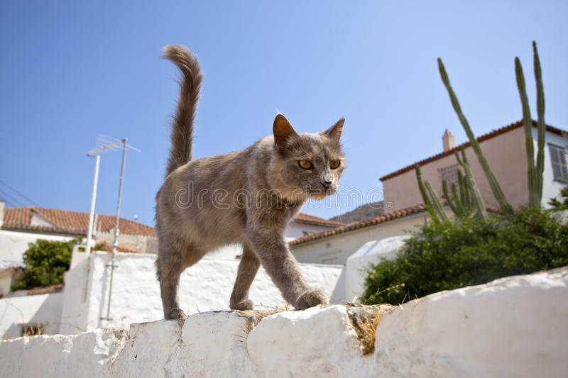 Gray cat. At the island of Hydra, Greece royalty free stock photo