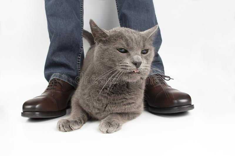 Gray cat next to the feet of a man shod in classic shoes. The Gray cat next to the feet of a man shod in classic shoes stock photography