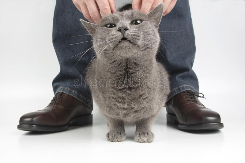 Gray cat next to the feet of a man shod in classic shoes. The Gray cat next to the feet of a man shod in classic shoes stock images