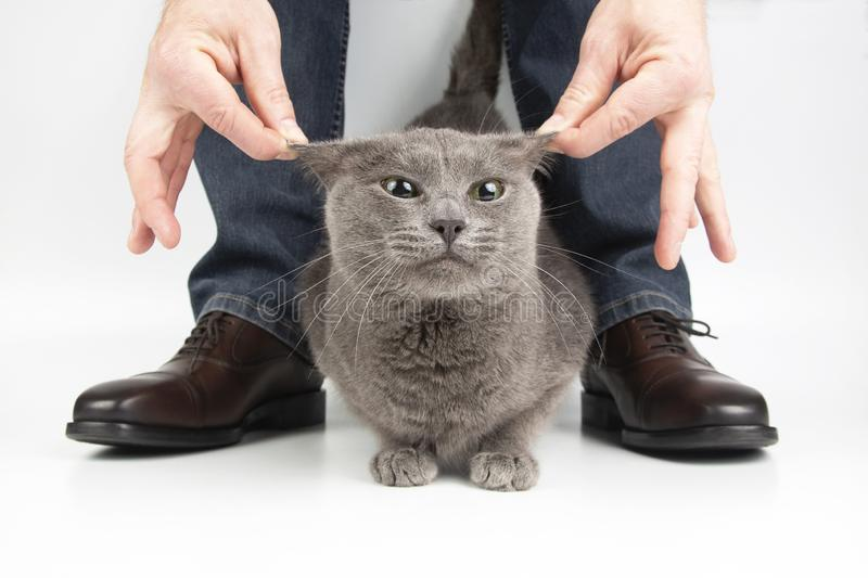 Gray cat next to the feet of a man shod in classic shoes. The Gray cat next to the feet of a man shod in classic shoes royalty free stock photos