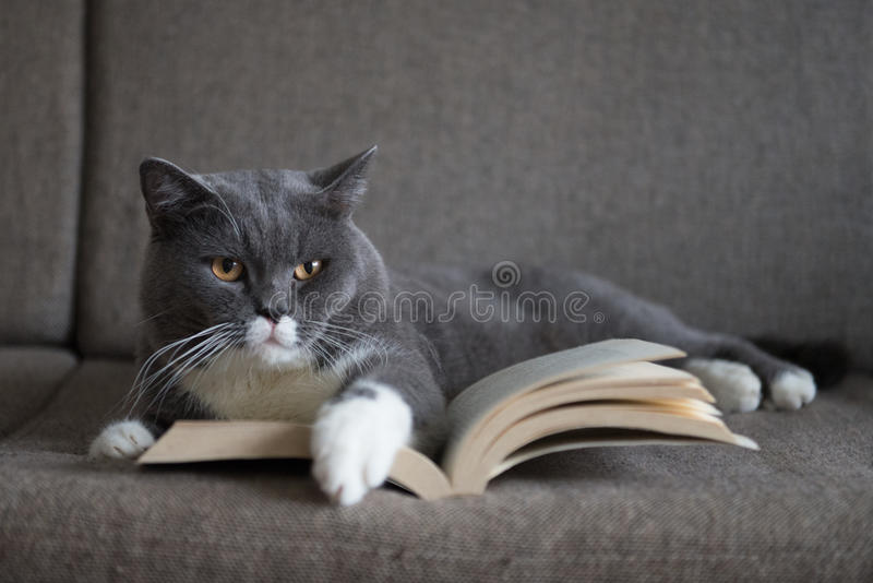 Image result for cat reading a book