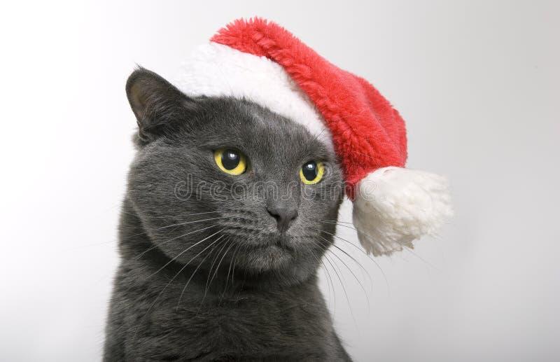 Gray Cat Santa - Weihnachtskatze stockfotos