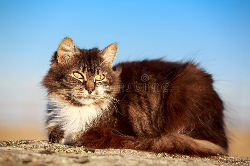 Download Gray cat stock image. Image of animal, rock, nature, kitten - 30860765
