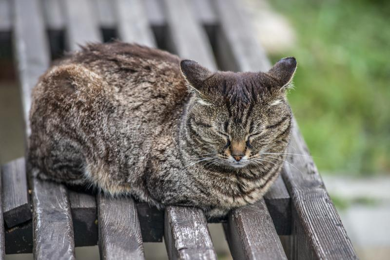 Gray cat sleeping on wooden bench in summer day royalty free stock photography
