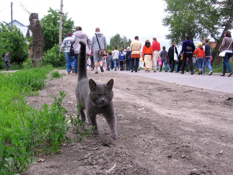 Gray cat is walking towards the crowd of people walking royalty free stock photo