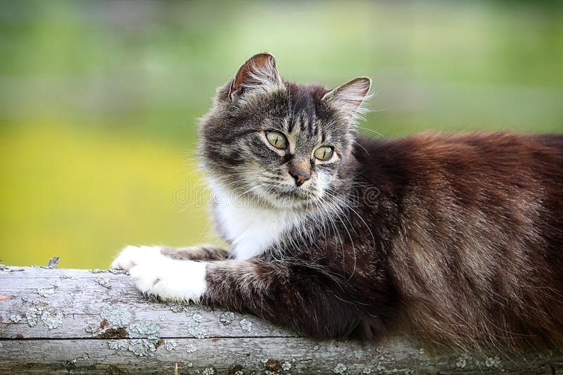 Download Gray cat with yellow eyes stock photo. Image of wood - 25761346