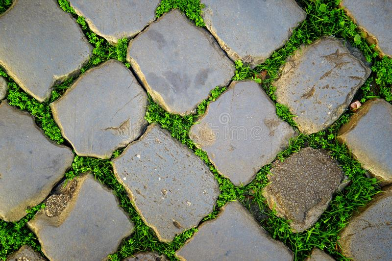Gray cobblestones of paving stones, between them grows young green shoots of grass. The texture of the old road. Gray cobblestones of paving stones, between stock photo
