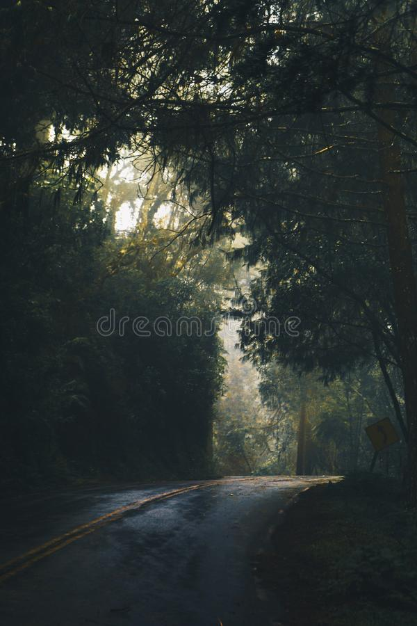 Gray Concrete Road With Curve Left Signage Under on Green Leaf Tree royalty free stock photo