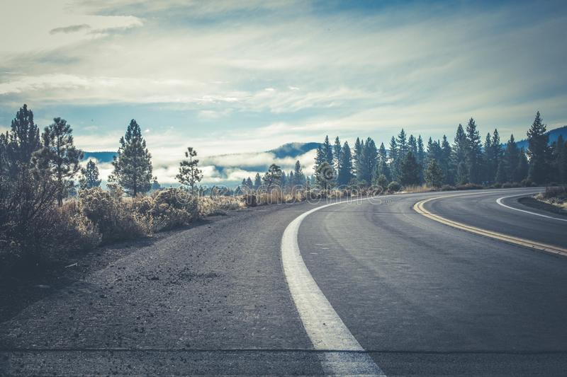 Gray Concrete Road Near Forest stock photography