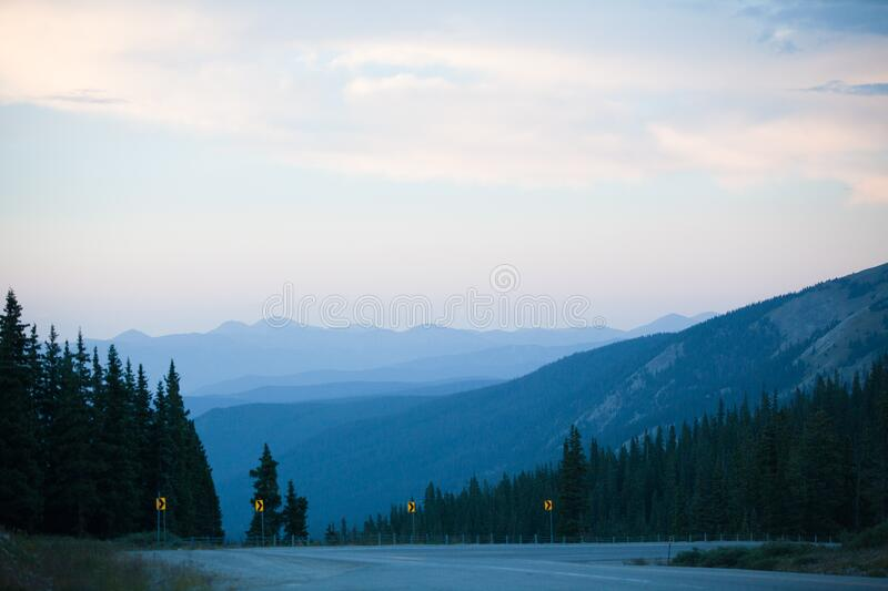 Gray Concrete Road Surrounded by Pine Trees Under Gray Sky royalty free stock photos