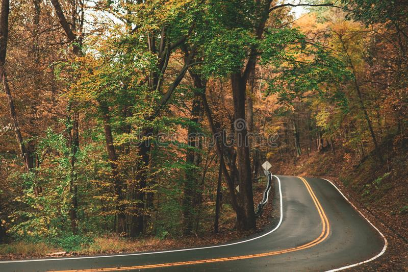 Gray Concrete Roadway Beside Green And Brown Leafed Trees Free Public Domain Cc Image