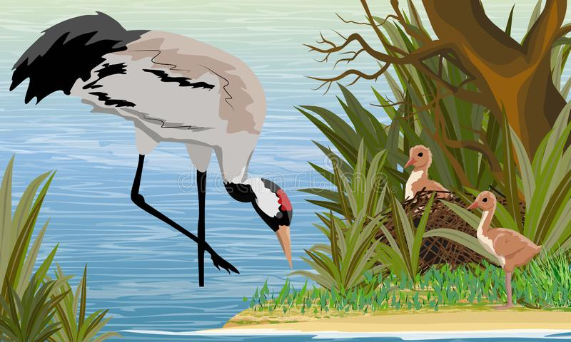 Gray Crane dans un marais ou un lac avec ses poussins dans le nid l'?tang est un arbre avec l'herbe grande Grue ou grus ou Eurasi illustration de vecteur
