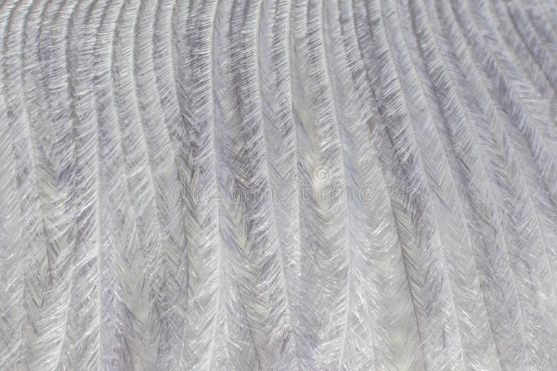 Gray decorative feather close-up, beautiful delicate texture. The image is great as a background, it is in gray tones. Visible fine texture of the pen, the stock photos