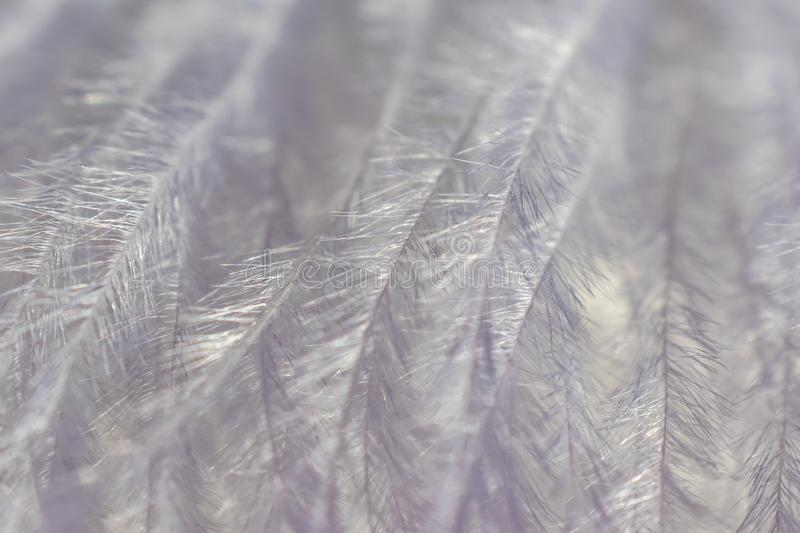 Gray decorative feather close-up, beautiful delicate texture. The image is great as a background, it is in gray tones. Visible fine texture of the pen, the royalty free stock photography