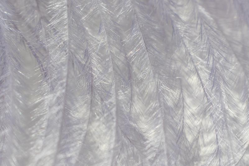 Gray decorative feather close-up, beautiful delicate texture. The image is great as a background, it is in gray tones. Visible fine texture of the pen, the stock images