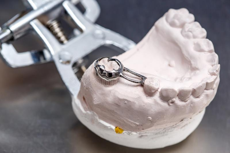 Gray dental prosthesis teeth mold, clay human gums model stock photos