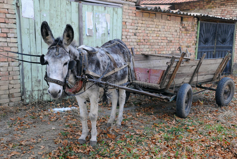 Download Gray Donkey and Empty Cart stock photo. Image of carting - 23841042