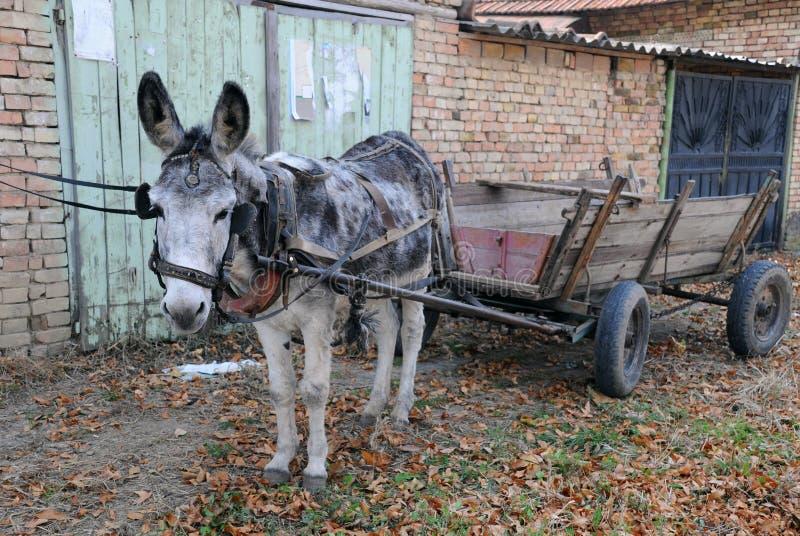Gray Donkey and Empty Cart