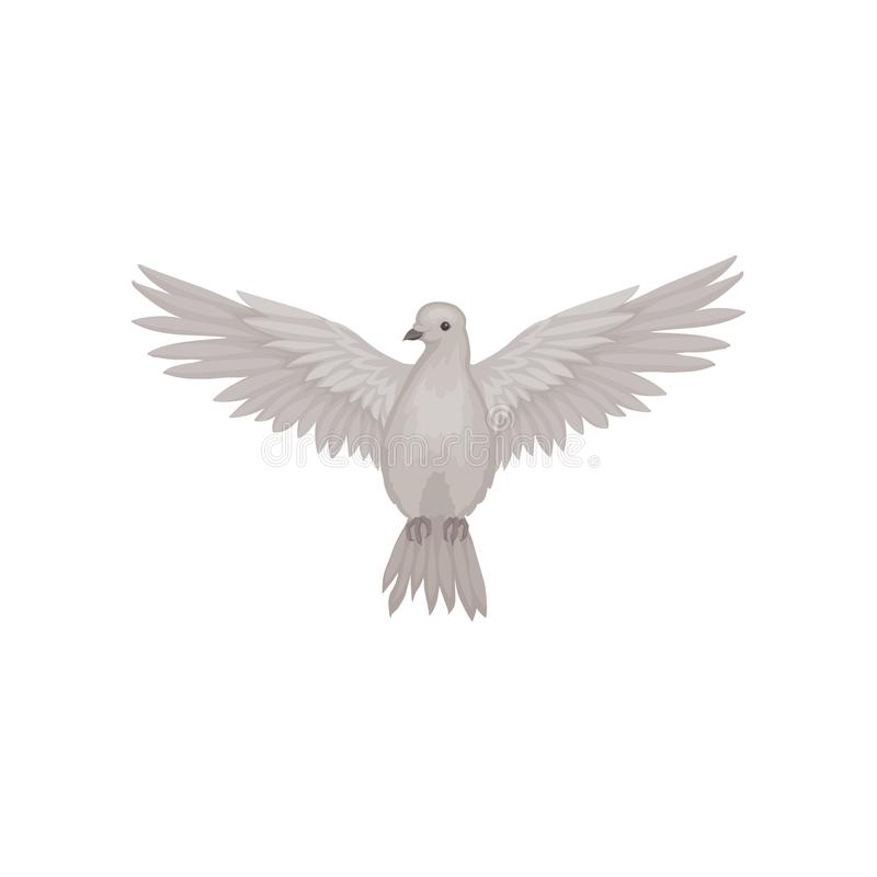 Free Gray Dove In Flying Action With Wide Open Wings, Front View. Fauna Theme. Flat Vector For Poster Or Ornithology Book Stock Photography - 131473422
