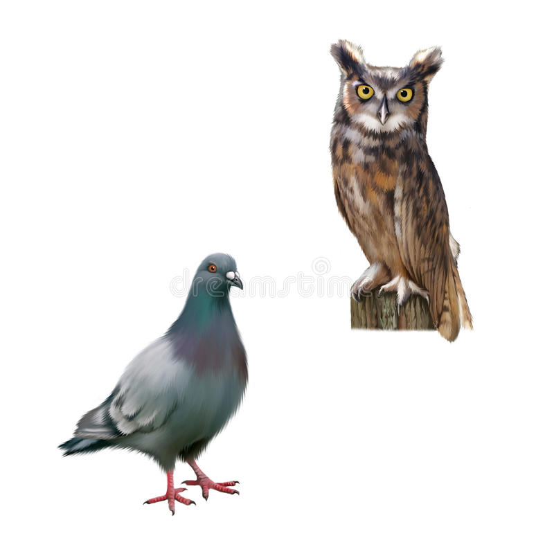 Free Gray Dove, Standing Pigeon, Eagle Owl Sitting On Royalty Free Stock Photos - 51248918