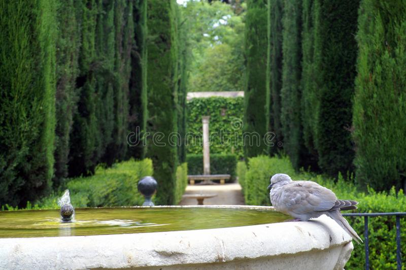 Dove on the edge of the fountain royalty free stock photos