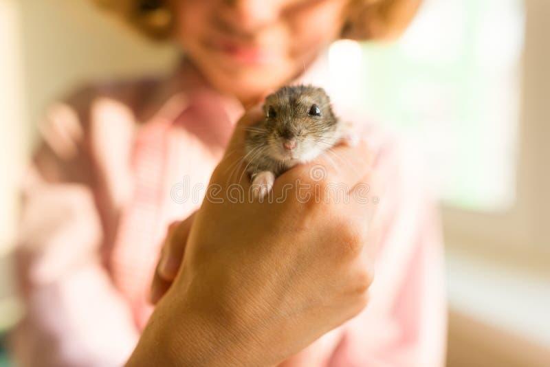 Gray Dzungarian-hamster in de handen van zijn kleine eigenaarmeisjes, close-up royalty-vrije stock foto