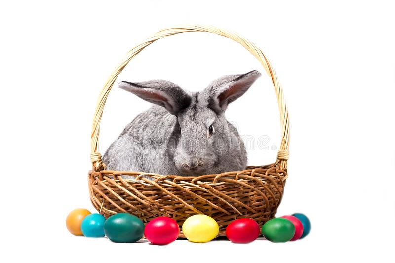 Gray easter bunny in a basket with eggs, isolate stock images