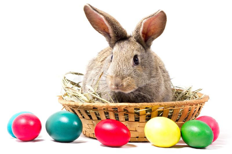 Gray Easter Bunny Sits In A Basket, Isolate, Blank For Easter Holiday stock image
