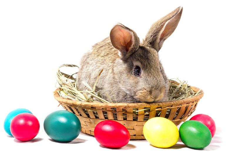 Gray Easter Bunny Sits In een Mand, isoleert, Spatie voor Pasen-Vakantie royalty-vrije stock foto's