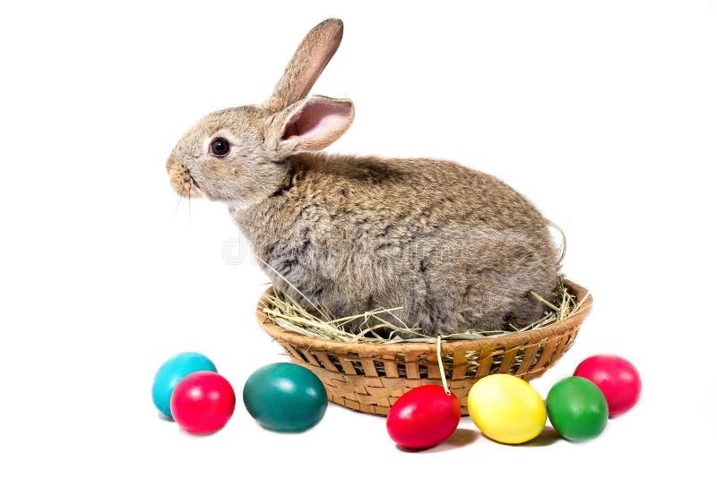 Gray Easter Bunny Sits In een Mand, isoleert, Spatie voor Pasen-Vakantie stock foto's