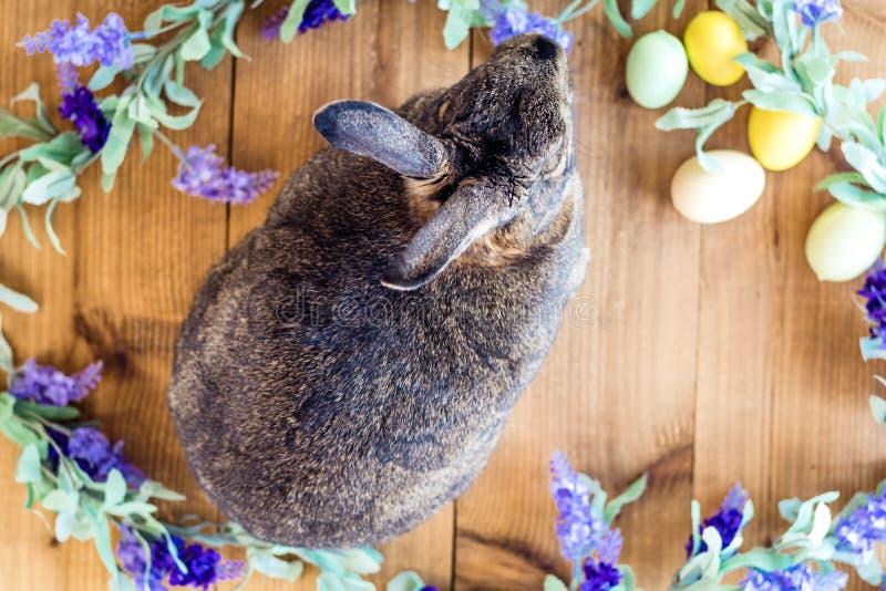 Gray Easter-het konijntjeskonijn met purpere lilac bloemen op houten vlakke raad, legt royalty-vrije stock foto