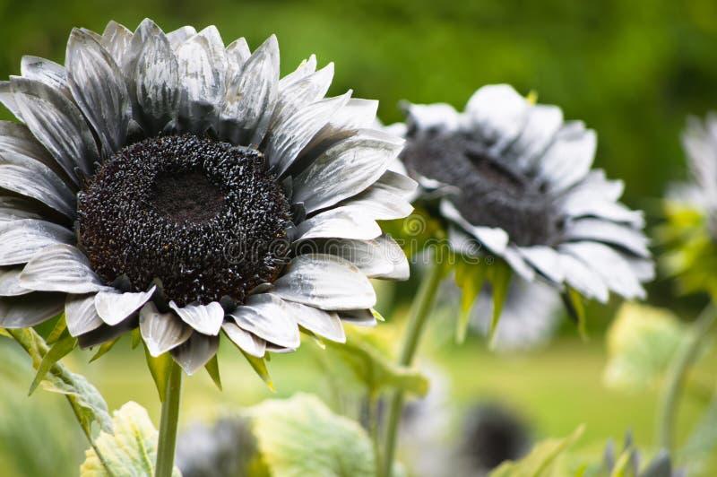 Gray Fake Sun Flower
