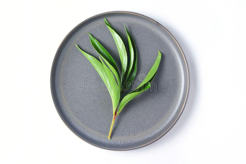 A gray flat plate on which lies a fresh leaf of a peony flower. top view, white background royalty free stock photo
