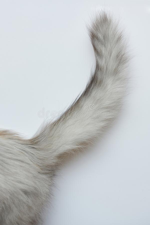 Gray cat tail stock images
