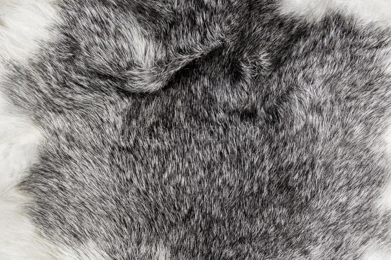 Gray fluffy fur with long hair background.  royalty free stock photos
