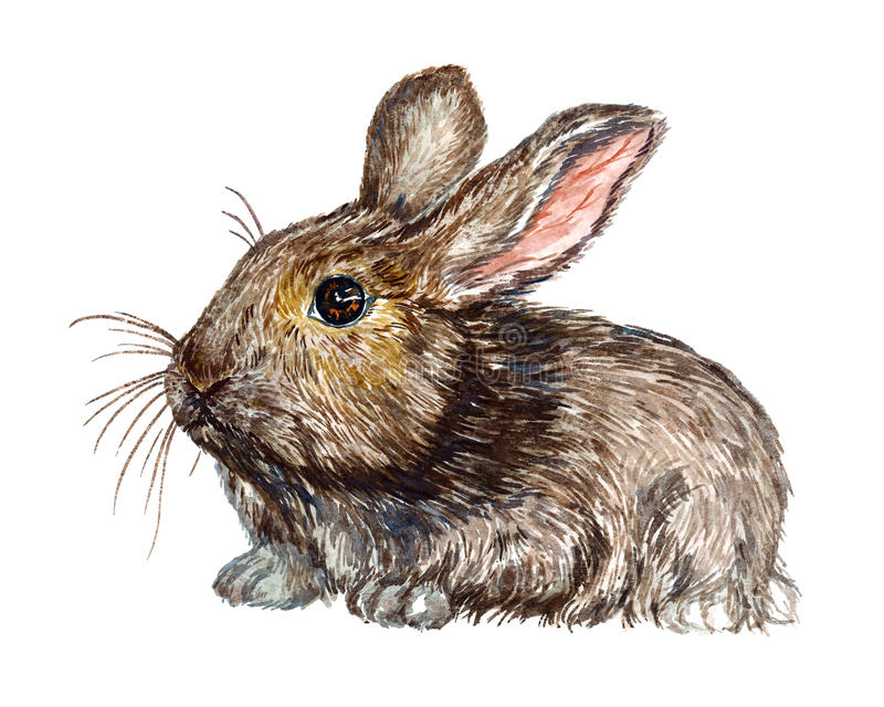 Gray fluffy hare rabbit siting vector illustration