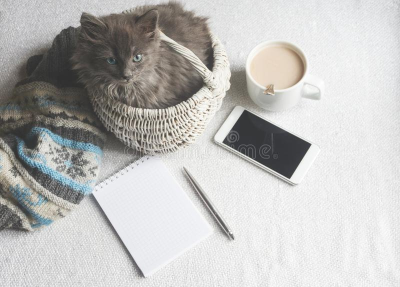Gray fluffy kitten in a basket, cup of coffee and a phone on a white surface. Gray fluffy kitten in a basket, coffee and a phone on a white surface royalty free stock photo