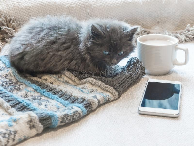 Gray fluffy kitten, cup of coffee and a phone on a white surface. Gray fluffy kitten, coffee and a phone on a white surface stock photos