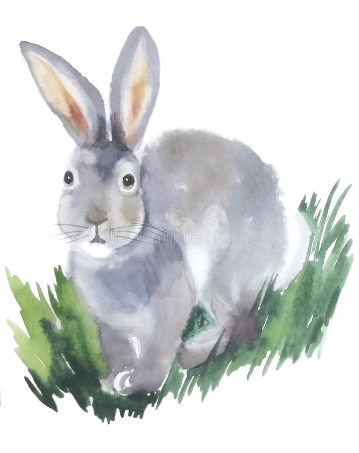 Gray fluffy rabbit sitting in the grass royalty free illustration
