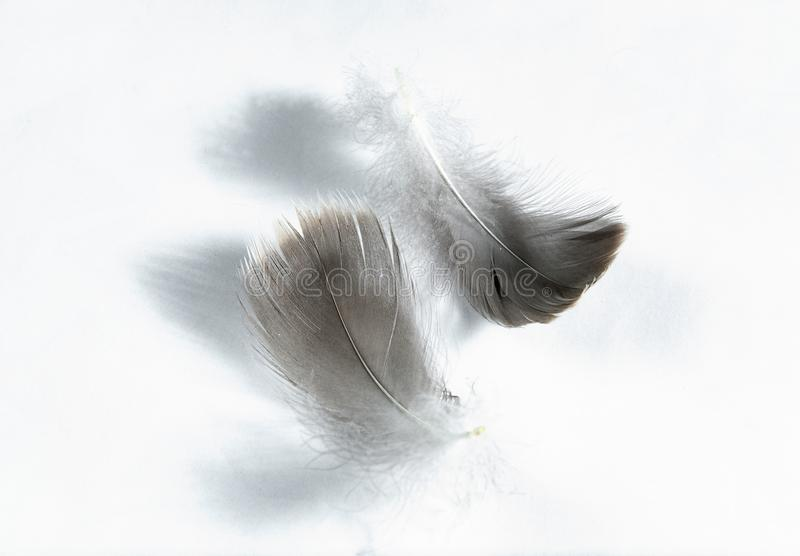Gray goose feathers and down royalty free stock photos