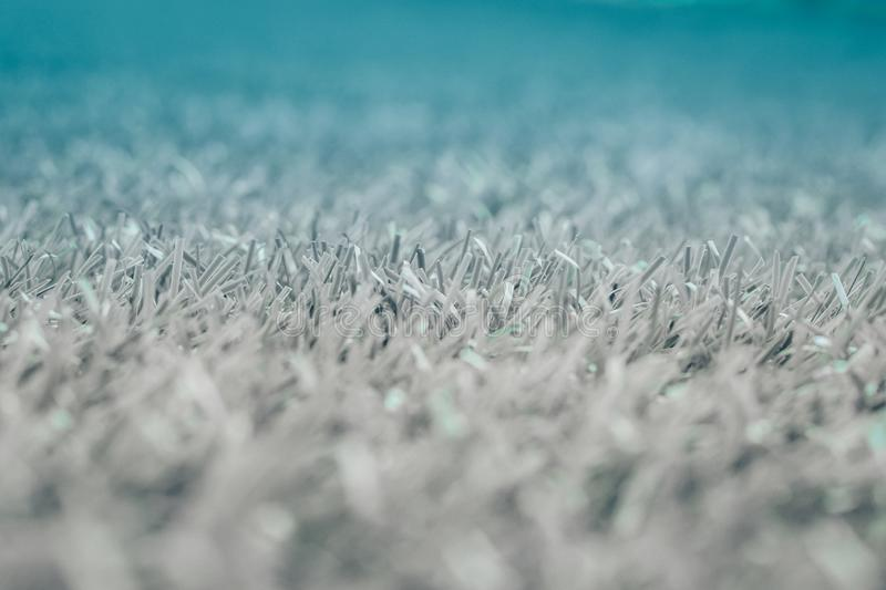Gray grass. background texture. fresh spring Gray grass. fluffy blanket. stock image