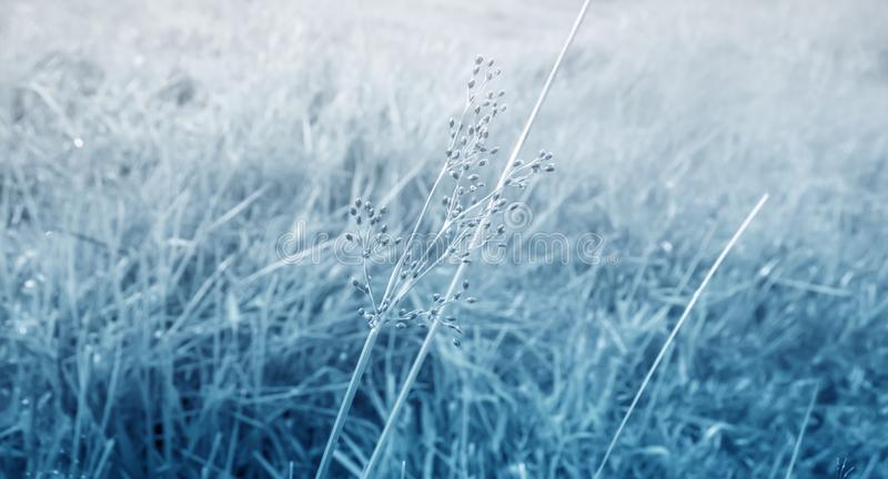 Gray grass flower and grass fields spring ,autumn abstract ba stock image